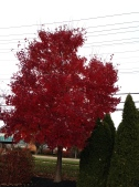I never though this red existed in nature!